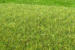 Model-Scene - Feuchtgebiet mittelgrün (F011) (H0)