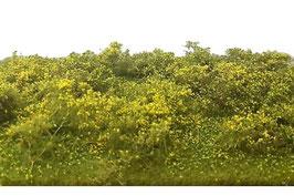 Silhouette - Waldlichtung Frühling, 25x15,5cm (742-21S)