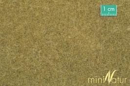 Silhouette - Rasen kurz, Spätherbst (710-24H)