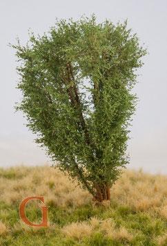 Polak - Laubbaum, 13 cm, savannengrün (9521)