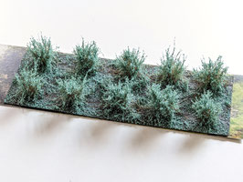Welberg - 10 Büsche Eukalyptus grün, Höhe 2-3 cm (SAEG)