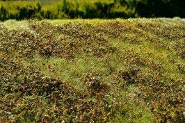 Model-Scene - Grasmatte mit niedrigen Büschen, Herbst (F510) (H0)