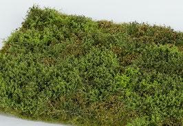 Model-Scene - Wildes Gebiet mit Büschen - Frühling (F571) (H0)