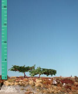 Silhouette - Japankiefer, ca 4cm (271-12) (H0)
