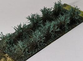 Welberg - 10 Büsche Wacholder grün, Höhe 2-3 cm (SAJG)
