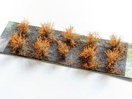 Welberg - 10 Büsche Herbst orange, Höhe 2-3 cm (SAOH)