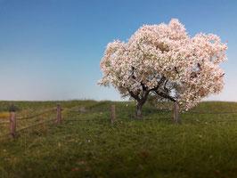 Silhouette 226-xx Apfelbaum, Frühling, in 2 Größen, 1:87 / H0