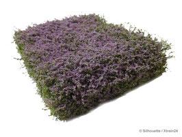 Silhouette - Sträucher violett blühend (250-49) (H0)