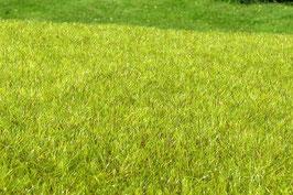 Model-Scene - Feuchtgebiet hellgrün (F010) (H0)