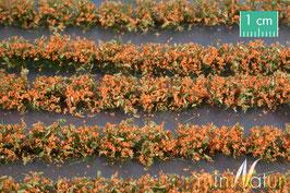 Silhouette/MiniNatur Blumenfeldstreifen orange, 231cm (767-25)