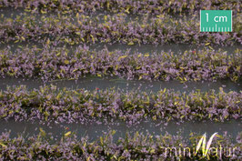 Silhouette/MiniNatur Blumenfeldstreifen violett, 231cm (767-24)
