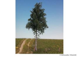 Silhouette - Tanne Hochstamm Profiline, 17-22cm (277-52) (H0)