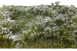Silhouette - Waldlichtung Sommer, 25x15,5cm (742-22S)