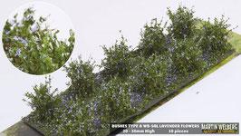 Welberg - SAL 10 Büsche Lavendel, Höhe 2-3 cm