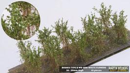 Welberg - SBW 10 Büsche mit weißen Blüten, Höhe 3-4 cm