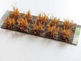 Welberg - 10 Büsche Rohleder braun, Höhe 2-3 cm (SDRB)