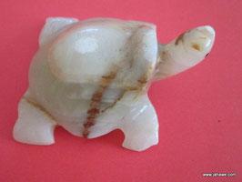 Schildkröte für Rückendeckung.