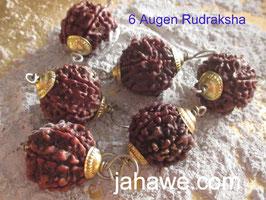 6 Augen , 6 Mukhi  Rudraksha gefasst Kappen vergoldet  1,7 cm Durchmesser, Für die Öffnung des Wurzelchakras und für Erdung.