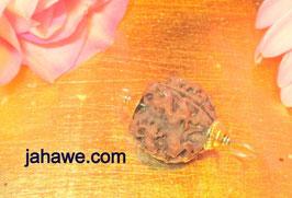 6 Augen Rudraksha sehr groß 2,4 cm, für Erdung und Öffnung des Wurzelchakras