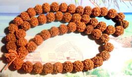 Rudrakshamala 54 Samen und eine Guruperle 5 Mukhi, Augen