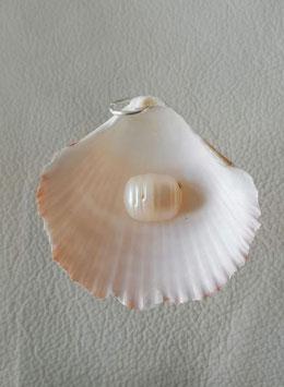 Muschelanhänger Nr.1  mit einer Zuchtperle ca 4 cm