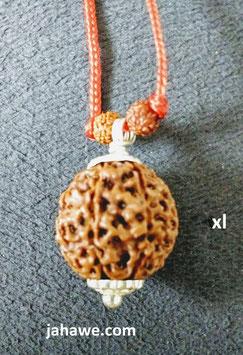 xl Rudraksha Durga ) Augen, Mukhi  aus Java. sehr sehr  kraftvoll , 24,86mm