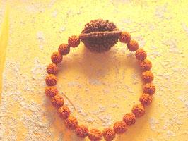 Rudrakshaarmband mit einer 2 Augen Rudraksha und kleinen 5 Augen Rudrakshas