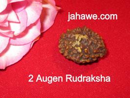 2 Augen Rudraksha mit etwas Sandelholzpaste von der Weihung