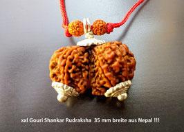 xxl Gauri Rudraksha aus Nepal 35 mm breit !!! sehr besonders, Nr.1