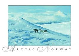 NORGESKORT 030-089