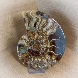 Ammonit #2