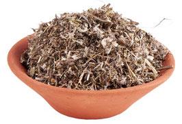 Habichtskraut (Hieracium pilosella)