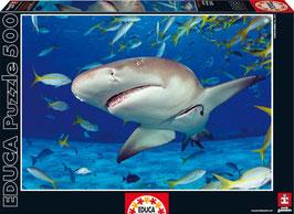PUZZLE Tiburón | EDUCA