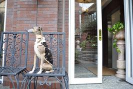 イタグレ服 襟付き水玉ノースリーブ  ベージュx茶色                                          Sleeveless with collar for Italian Grey hound and Others