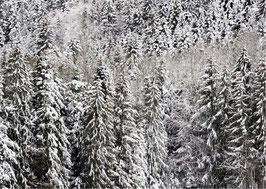 Postkarte Schnee quer dunkel