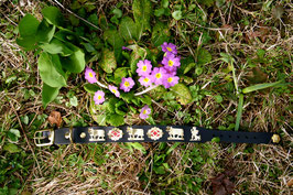 Appenzeller Sennen- Hundehalsband 3,5 cm breit