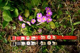 Appenzeller Sennen- Hundehalsband 2,5 cm breit