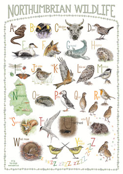*New Year's offer! Reduced Price!* Northumbrian Wildlife Animal Alphabet A2 Poster