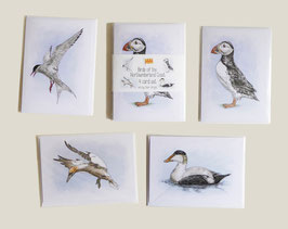 Birds of the Northumberland Coast card set (4 cards)