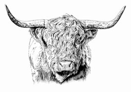 Highland Cow limited edition print. Ink pen (2017).