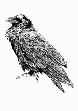 Raven limited edition print. Ink pen (2016)