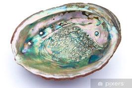 Abalone      (Beispiel Bild)