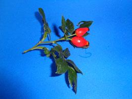Hagebutte 10 Gramm, vom eigenen Wildrosen Busch