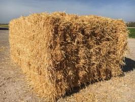Paille d'orge - Barley straw - Gerstestro