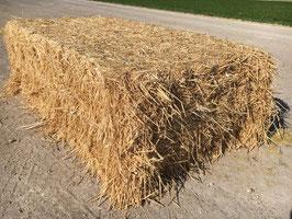 Paille de blé - Wheat straw - Tarwestro