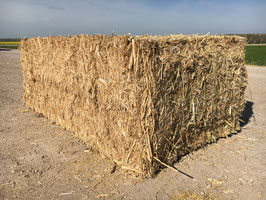Paille de colza - Rape straw - Koolzaadstro