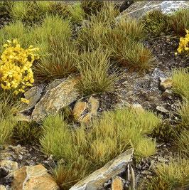Gamers Grass Highland Set Basing Material
