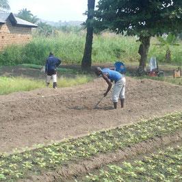Anteil zum Erwerb von Agrarland