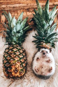 "Print ""Pineapple"""