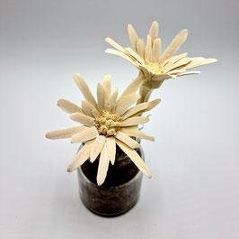 Edelweiss-Blume (Handgeschnitzt)